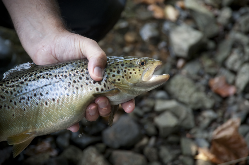 Tips for fishing with out death in WeFish Catch and release