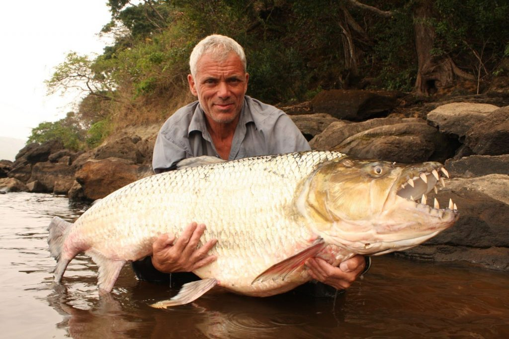 TigerFish MOST DANGEROUS FISH IN THE WORLD  Fishing app Wefish