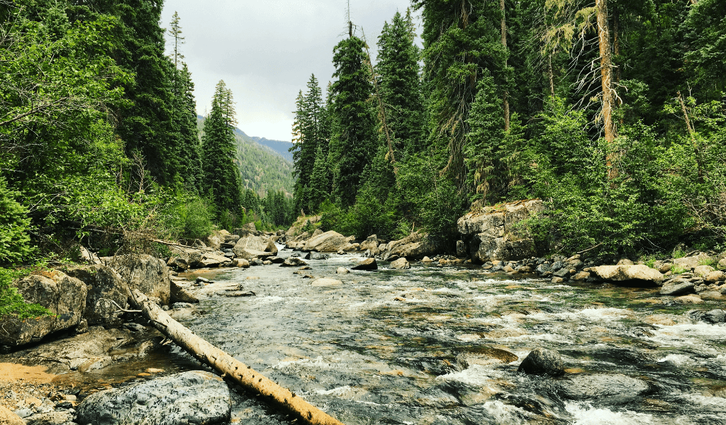 catch trout in rivers