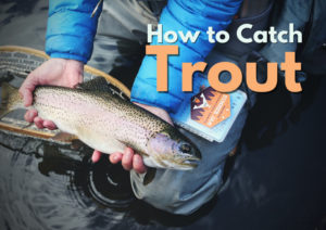 How to catch trout